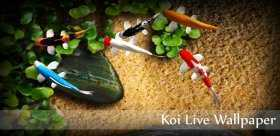 Koi Live Wallpaper Full APK indir